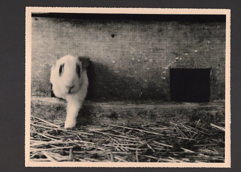 Il coniglio che esce